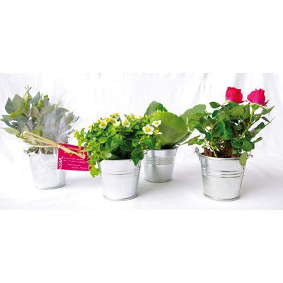 Mini plante en pot zinc - article publicitaire