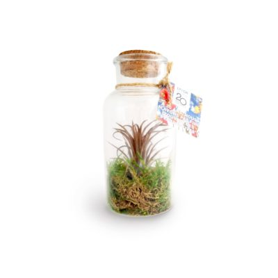 Terrarium pot tillandsia grand - article publicitaire